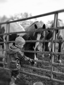 H with Horses PIC